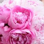 Sposa e matrimonio in Rosa