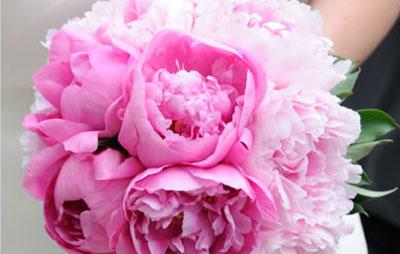 bouquet_sposa_rosa